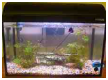 Fish quarantine tank